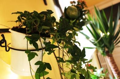 giardino verticale_1